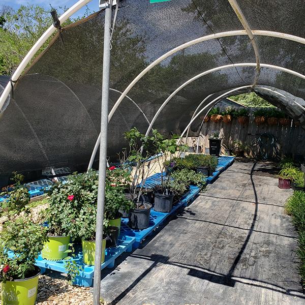 eldreds house plants