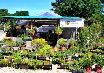 eldreds plant nursery