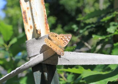 butterfly on post