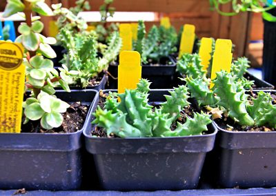 USDA organic plants