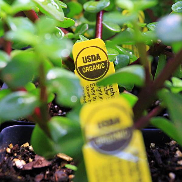 USDA organic plant