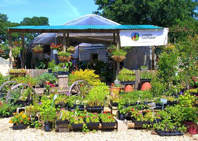 Eldreds plant nursery plants and flowers